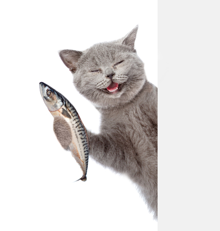 best cat food - cat laughing with fish