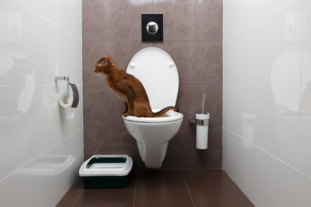 Cat Litter - Feline Follower