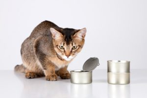 Best Canned Cat Foods to Buy