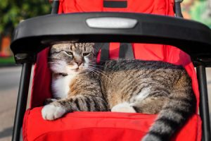 best cat stroller for travel