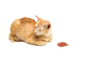 How Long Can A Cat Go Without Eating - Feline Follower