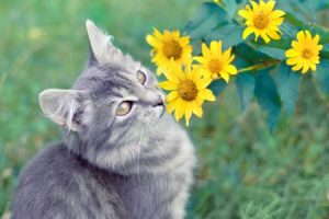 9 Dangerous Plants your Cat must avoid while camping