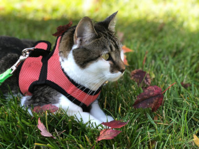 Is it bad to keep a harness on a cat?