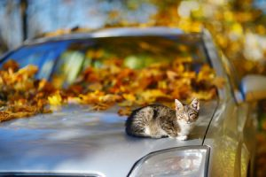 best way to move cats across country in a car - felinefollower.com