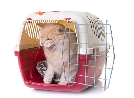 cat carrier - felinefollower.com