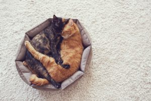 Best Cat Bed Big Enough for Two Cats