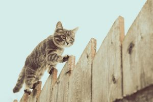 Best Wireless Electric Fence for Cats Above Ground