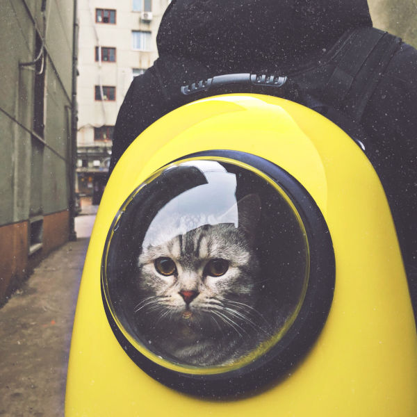 Do cats like bubble backpacks?