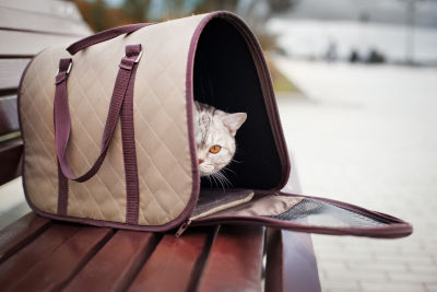 best cat carrier for cats who hate carriers