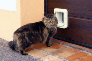 cat mate vs sureflap