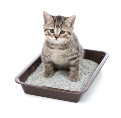 do you need a litter box for an outdoor cat