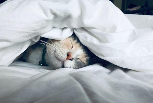 Cat in a bed.