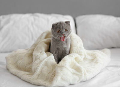 Why does my cat bite my blanket and knead it?