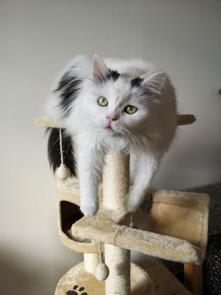 A cat on a cat tree.