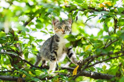 teach cat to climb down tree