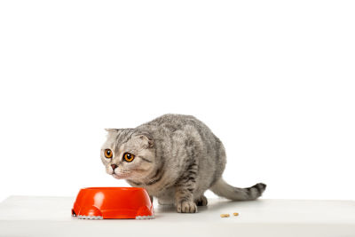 is it ok to feed expired cat food
