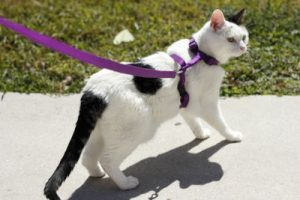 best cat harness for hiking