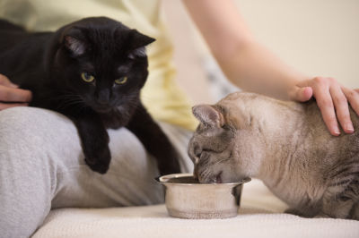 is fancy feast good for cats