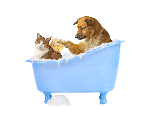 cat vs dog shampoo