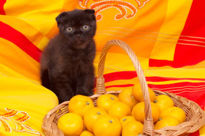 Why do cats hate oranges