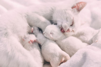 Why wont my cat wean her kittens?