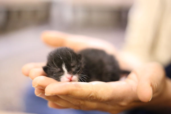 A kitten in its owners hand.