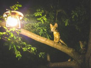 Do cats need night lights?