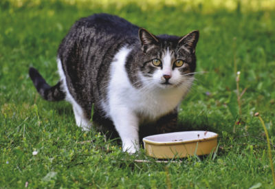 My cat doesn't drink water but eats wet food.