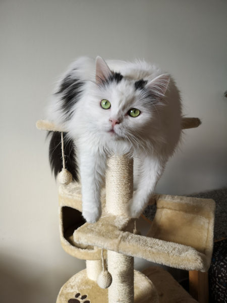 How long do cat trees last?