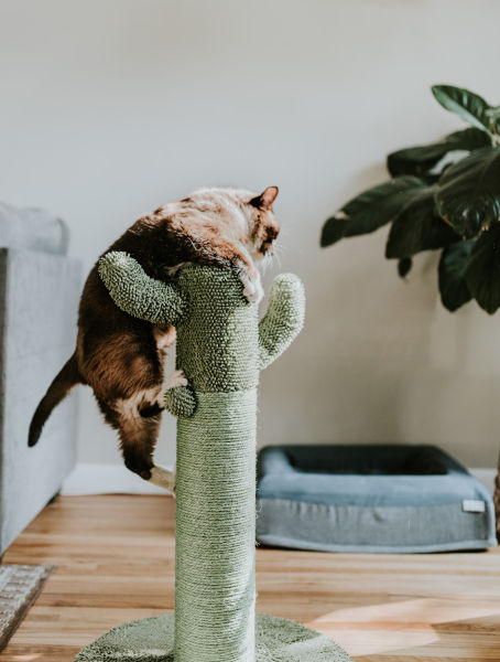 A cat in a cat tree.