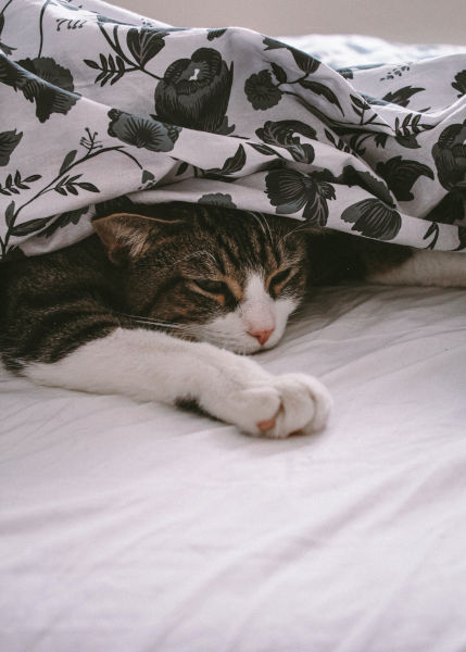 A cat under some bed covers.