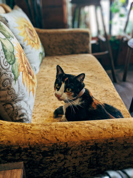 A cat on a couch.