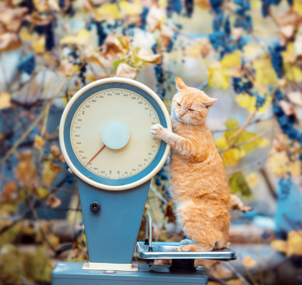Cat standing on the scales in the garden