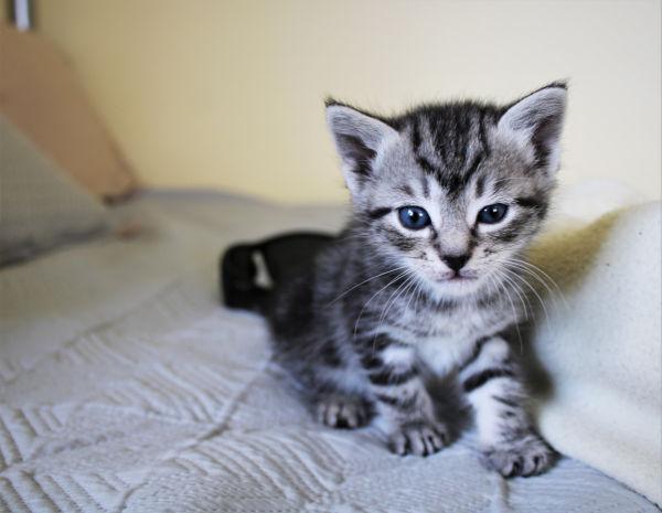Kitten hissing at older cat.