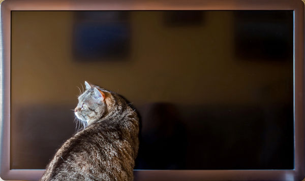 Cat is sitting near the TV screen