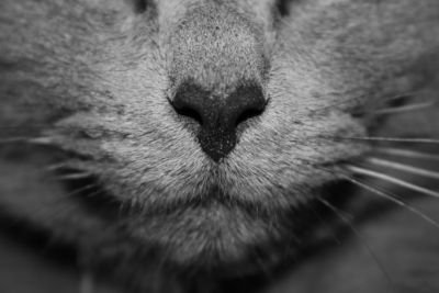 Should you clean your cat's nose?