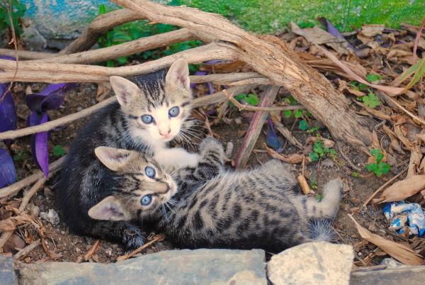 2 feral kittens outside.