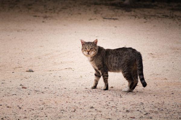 A feral cat outside.