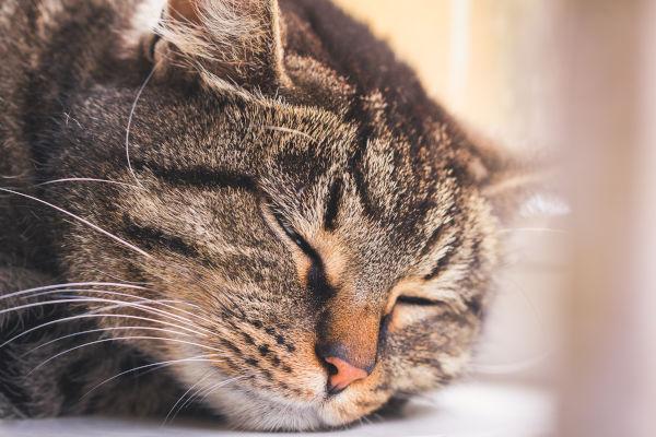 Sleeping striped cat on a window sill
