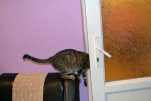 Cat wont stop trying to open door