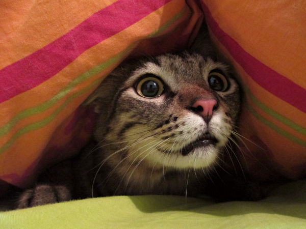 A Scared Cat Hiding
