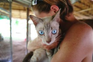 How long does it take for cyproheptadine-to work in cats?