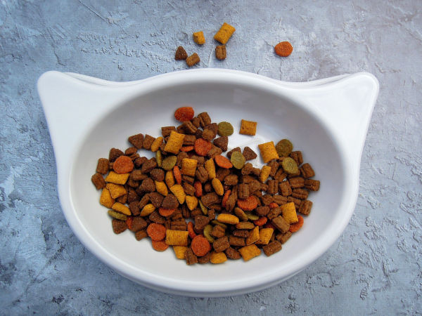 Is dry food bad for cats?