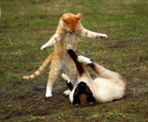 How do you discipline a cat that attacks another cat?