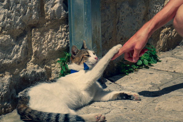 Do cats feel bad when they scratch you?