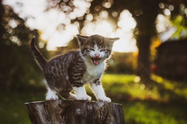 How long will a feral cat leave her kittens?