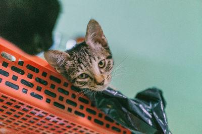 Cat ate plastic shopping bag.
