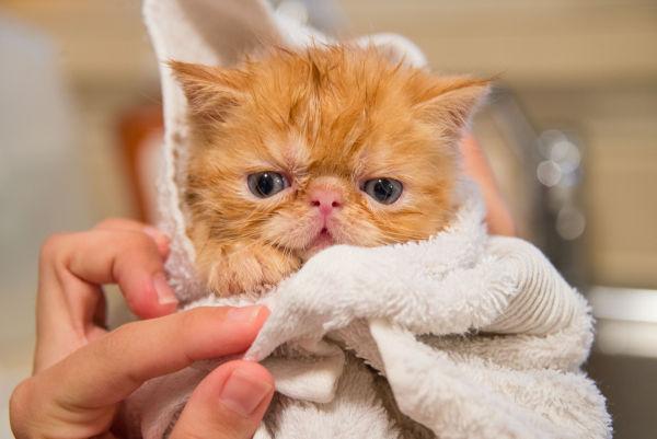 Cat peed during bath