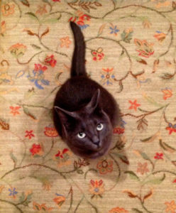 New carpet smells like cat pee.