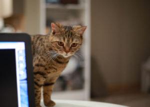 Cat proof desk chair.